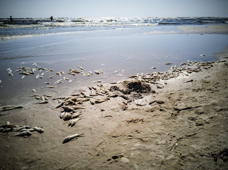 Beaucoup de poissons morts photos libres de droits
