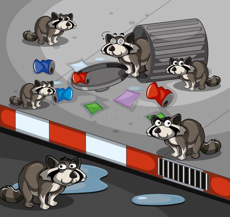 Beaucoup de ratons laveurs recherchant des déchets par la route illustration de vecteur