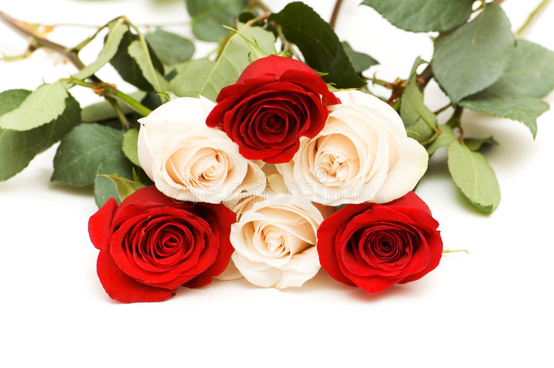 Beaucoup De Roses D Isolement Sur Le Fond Blanc Photographie stock libre de droits