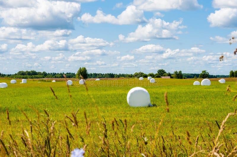 Beaucoup de sacs blancs de foin fauché et emballé présenté sur le champ vert entouré par paysage scénique images libres de droits