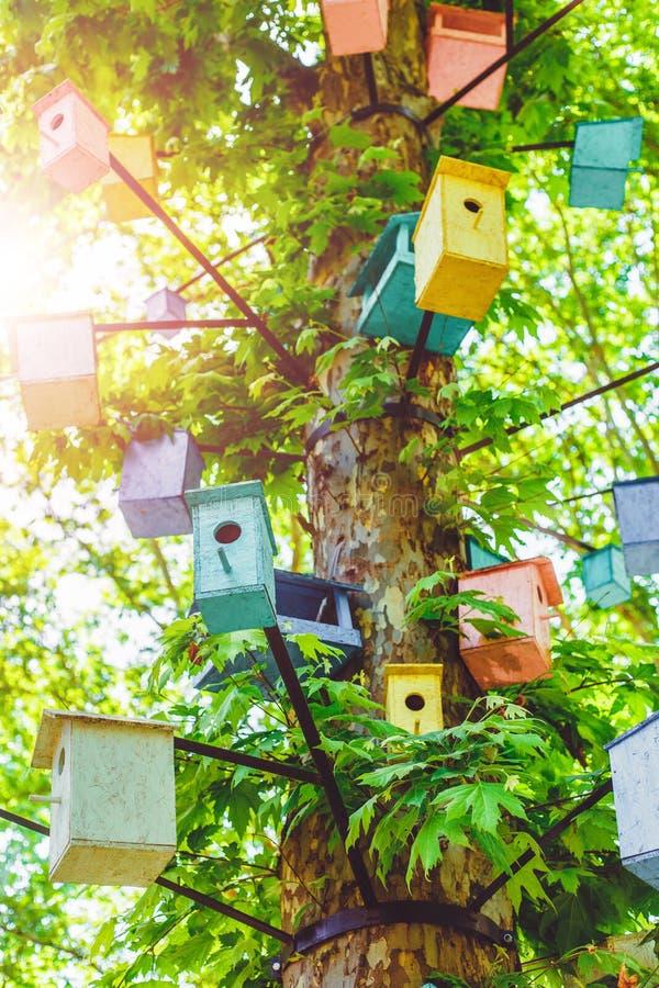 Beaucoup de volières de différentes couleurs sur l'arbre photos libres de droits