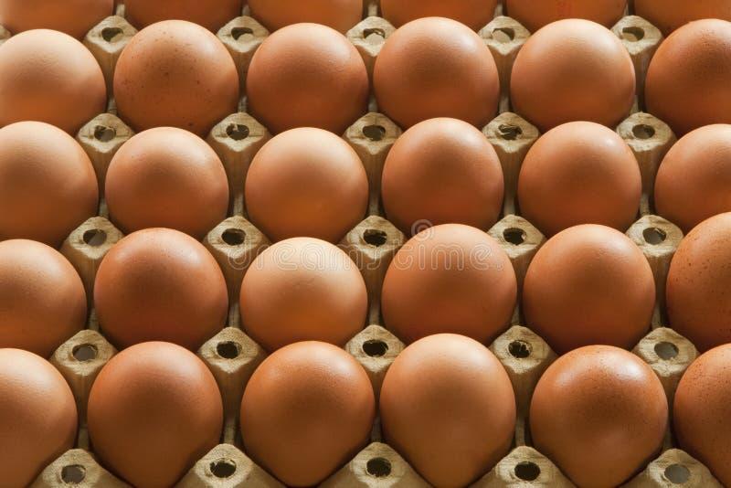 Beaucoup Eggs dans l'empaquetage de carton d'oeufs images libres de droits