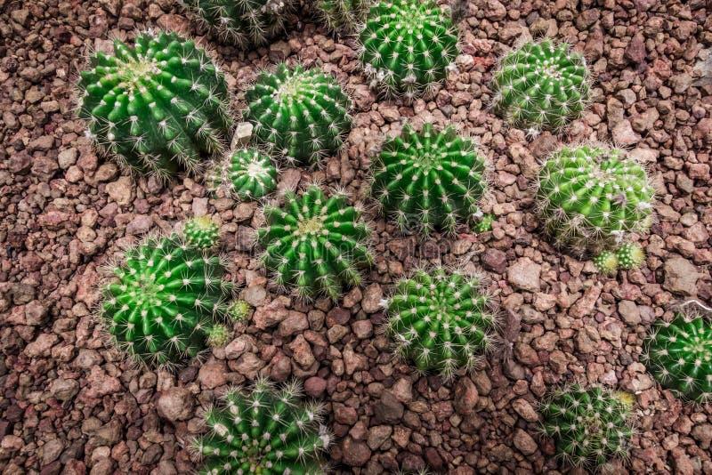 Beaucoup entourent le cactus de forme sur la vue supérieure dans le ton de vintage images stock