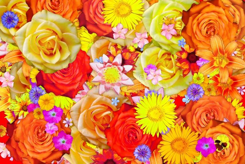 Beaucoup fleur de floraison de coreopsis et différentes fleurs soustraient le fond photo stock