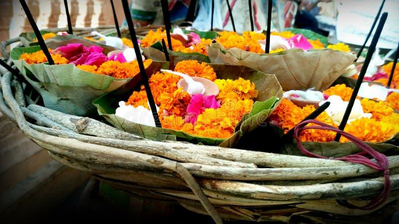 Beaucoup fleurissent des pétales avec de belles couleurs photographie stock libre de droits