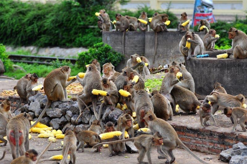 Beaucoup monkey photographie stock libre de droits