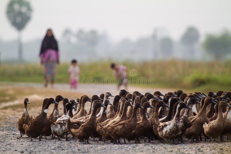 Beaucoup se penchent et agriculteur photographie stock