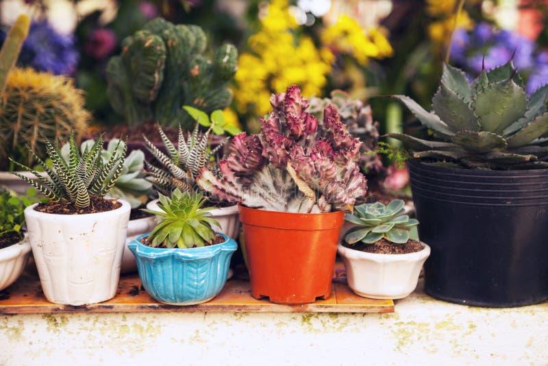 Beaucoup usines à la maison mises en pot de succulent et de cactus dans une arrière cour images libres de droits