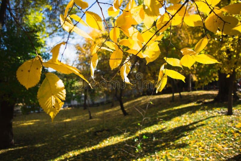 Beauiful autumn landscape. and autumn sun stock photos