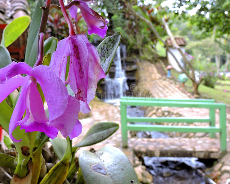Beauiful dayorchidea. Beautiful landscape from colombian mountains and its rivers royalty free stock image