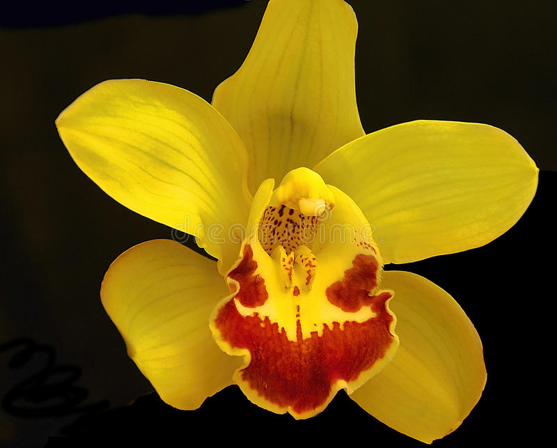 Beauiful orchid. Beautiful orchid close up in my room stock images