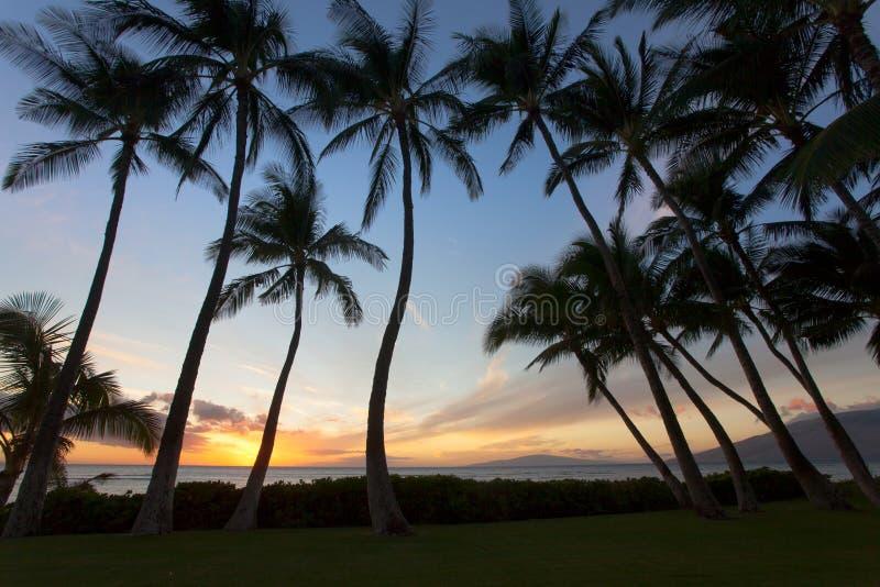 Beauitful södra Maui sunet mellan palmträden arkivfoton