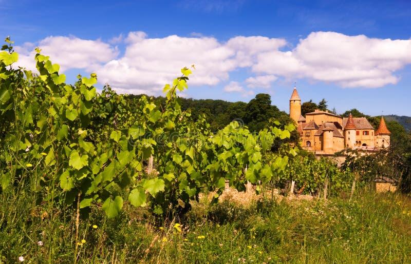 beaujolais αμπελώνες στοκ εικόνες με δικαίωμα ελεύθερης χρήσης