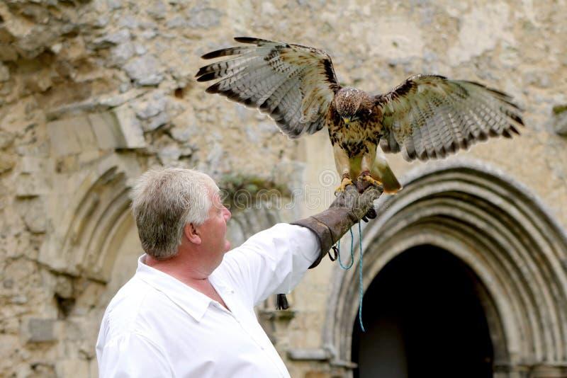 Beaulieu, Hampshire, R-U - 29 mai 2017 : Fauconnier avec sa buse images libres de droits