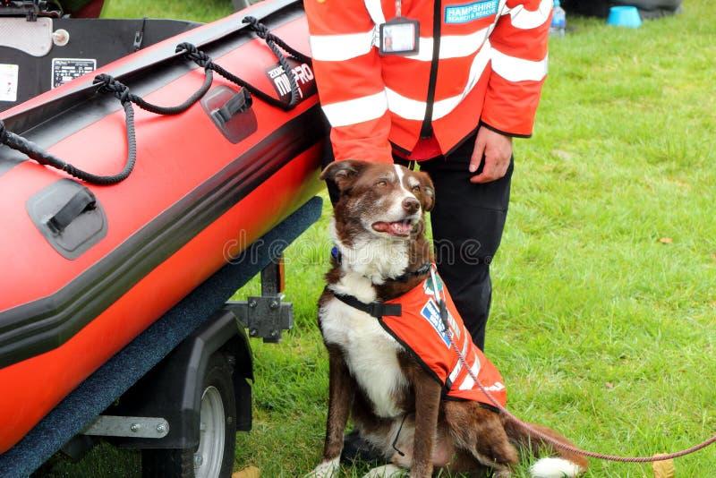 Beaulieu, Hampshire, Regno Unito - 29 maggio 2017: Cane ed il suo belon dell'operatore fotografie stock libere da diritti