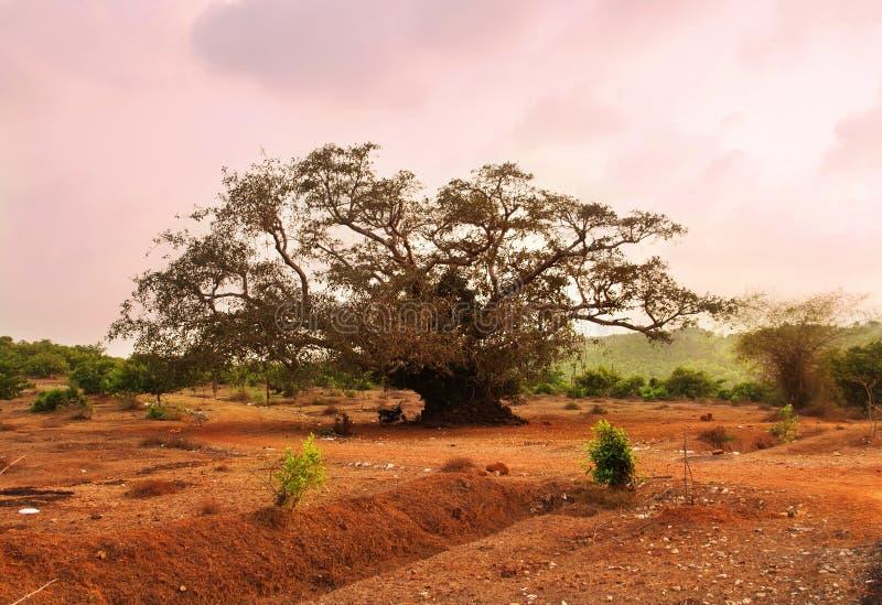 Beaurtiful rosa solnedgång Färgrikt naturlandskap Gokarna Karnataka, Indien arkivfoto