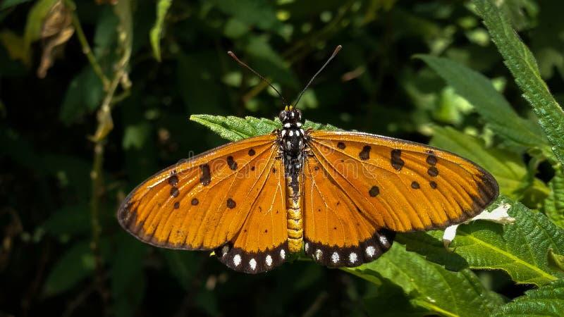 Beauté à ailes montrant la vision du créateur images libres de droits
