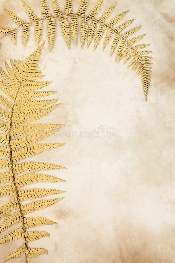 Beauté d'or de feuille image stock