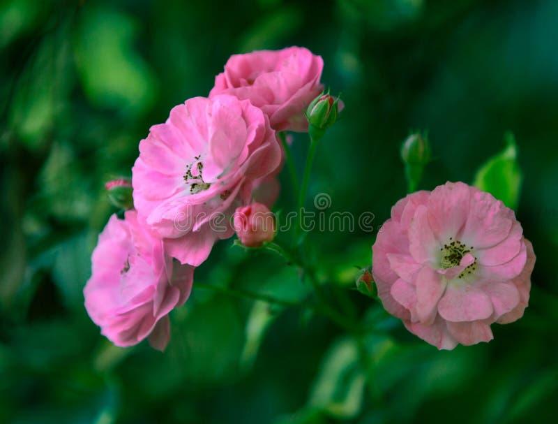 Beauté d'une fleur photo libre de droits