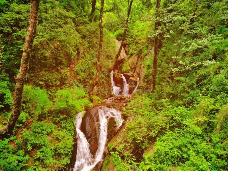 Beauté de charme dans la forêt photos stock