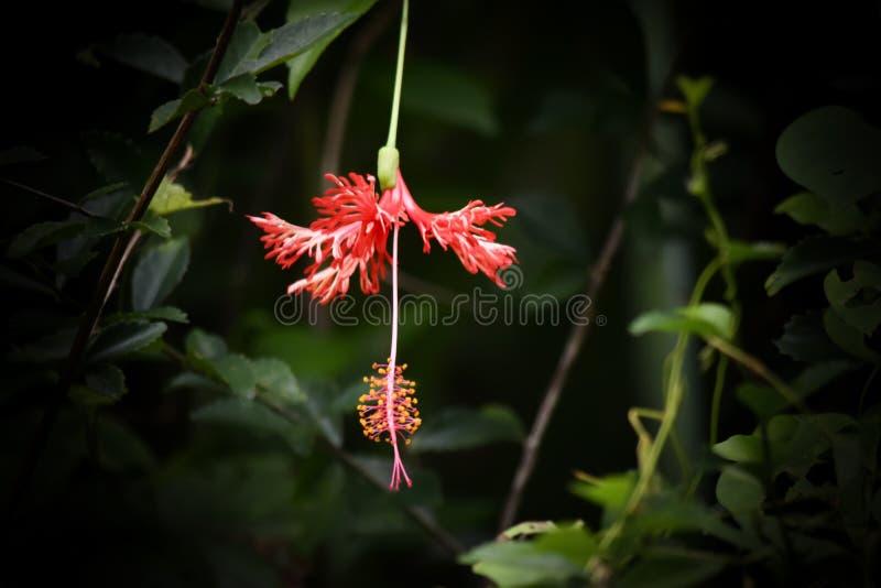 Beauté de chaussure rouge de fleur images stock
