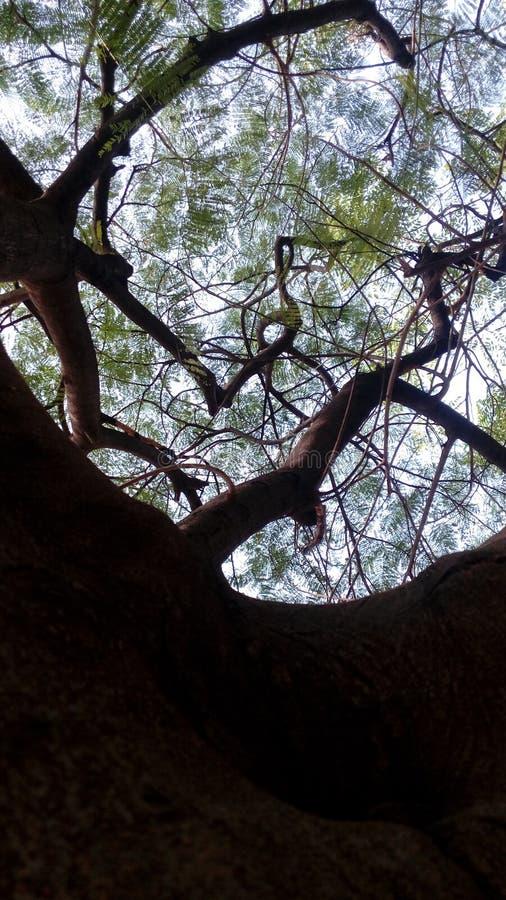 Beauté de forêt photos stock