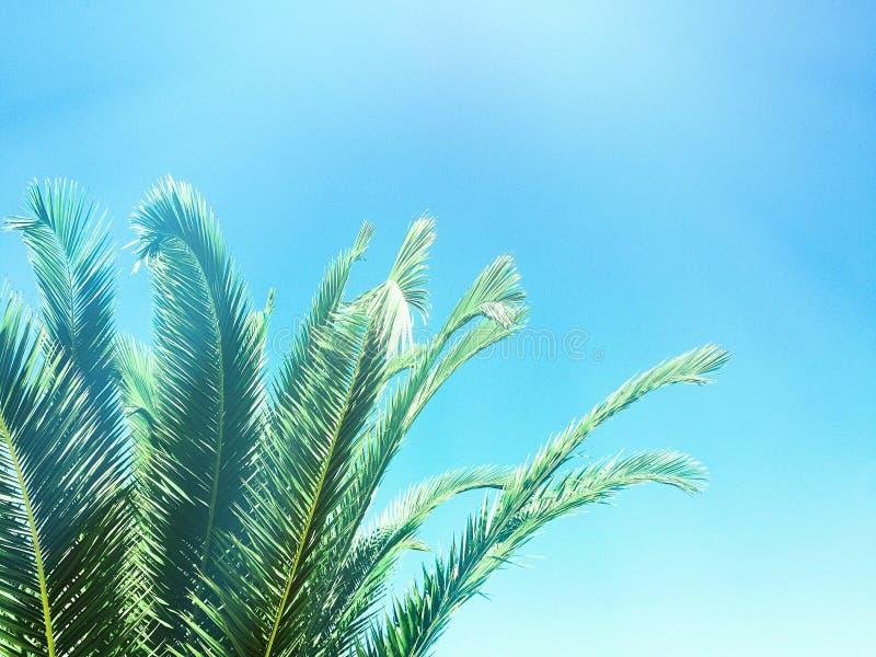 Beauté des tropiques photos libres de droits