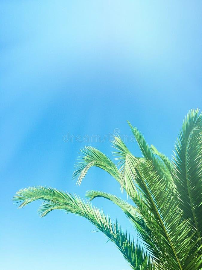 Beauté des tropiques photo stock