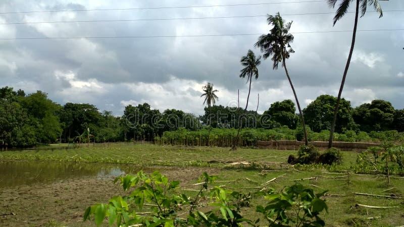 Beauté du Bengale photographie stock libre de droits