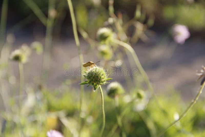 Beauté en nature images stock