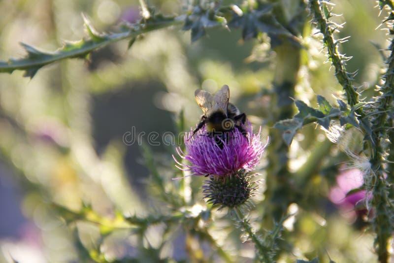 Beauté en nature image libre de droits