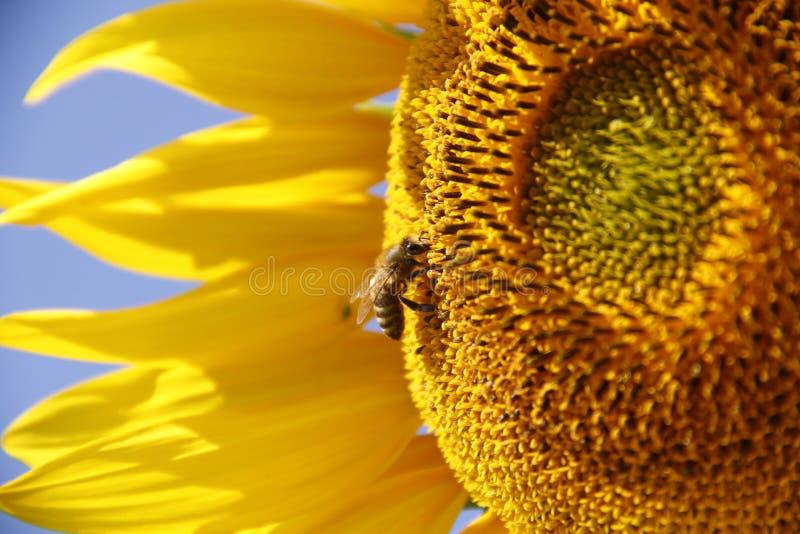 Beauté en nature photos libres de droits