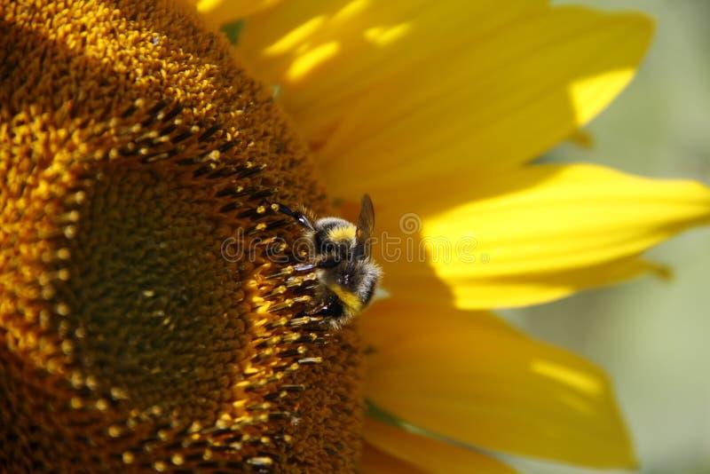 Beauté en nature photographie stock