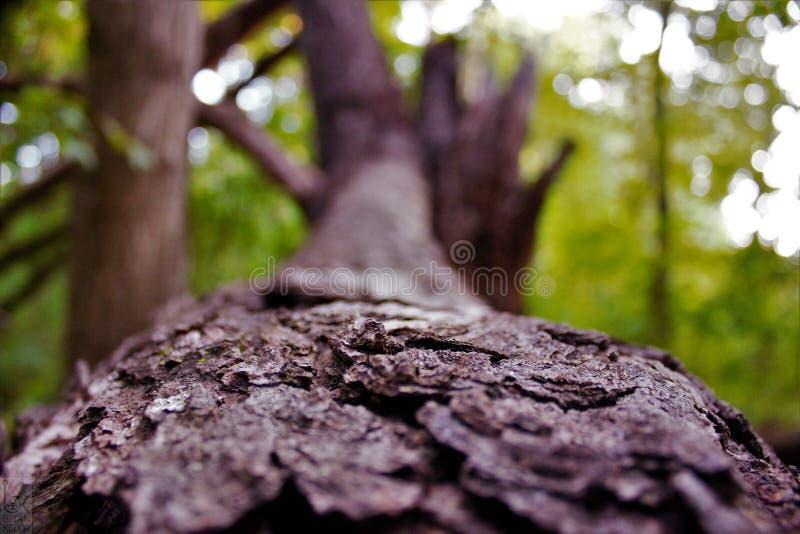 Beauté en nature simpliste ! photos stock