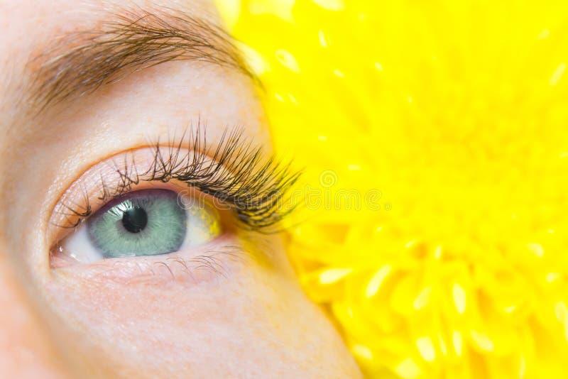 Beauté et concept de mode - procédures d'extension de cil fille avec de longs cils artificiels de yeux verts et fleur jaune Moque photos stock