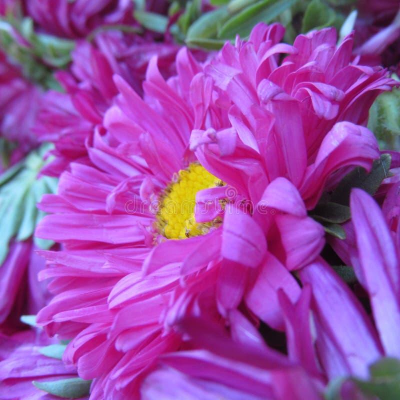 Beauté florale photos libres de droits