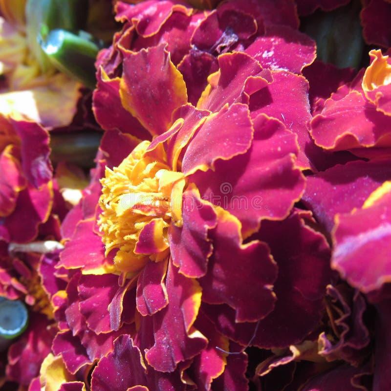 Beauté florale images libres de droits