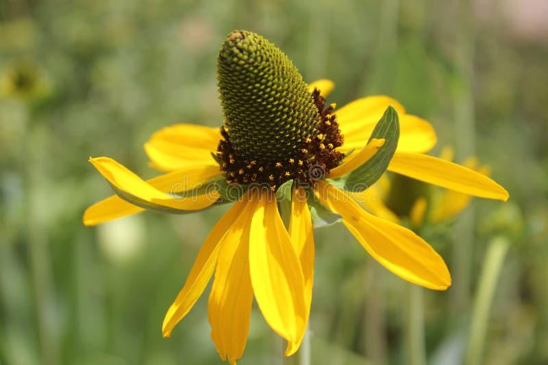Beauté jaune photo stock