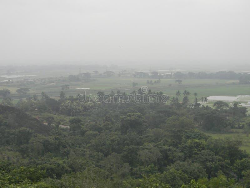 Beauté naturelle aux jungles images libres de droits