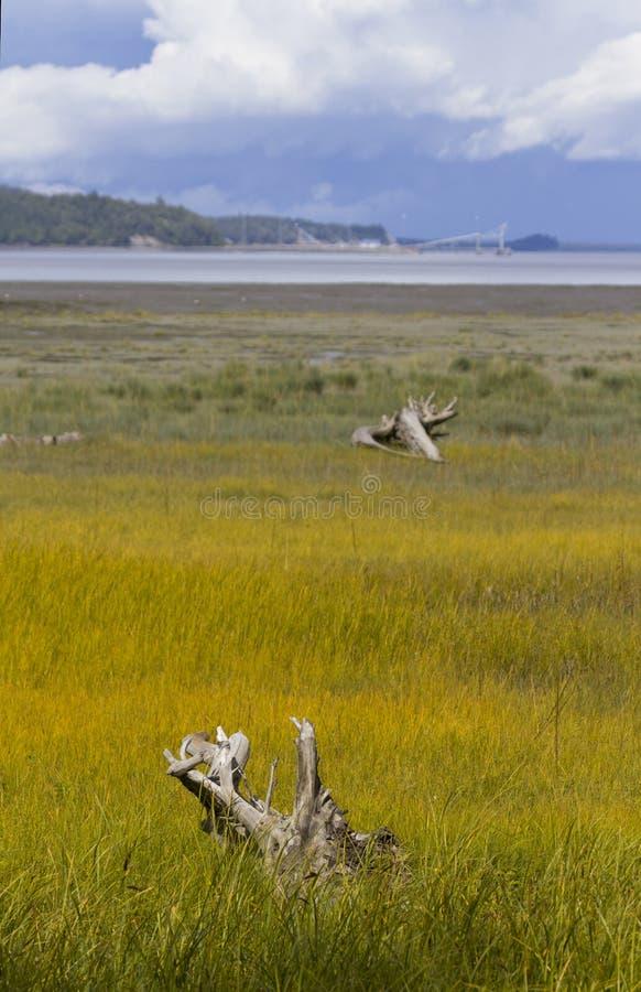 Beauté naturelle de lagune de Westchester à Anchorage image stock