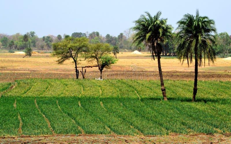 Beauté naturelle de paysage de terres cultivables photo libre de droits