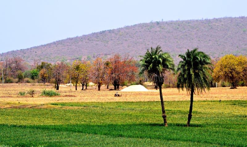 Beauté naturelle de paysage de terres cultivables photos stock