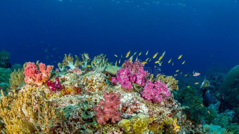 Beauté naturelle exceptionnelle authentique Misool, Raja Ampat, Indon?sie photographie stock