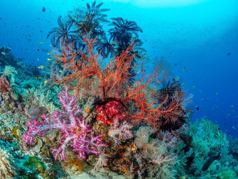 Beauté naturelle exceptionnelle authentique Misool, Raja Ampat, Indon?sie photos stock