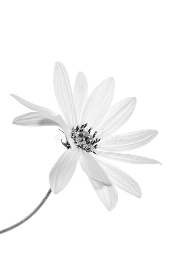 Beauté simple images stock