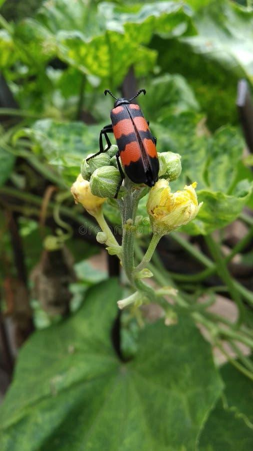 Beauté stupéfiante de nature avec l'insecte image libre de droits