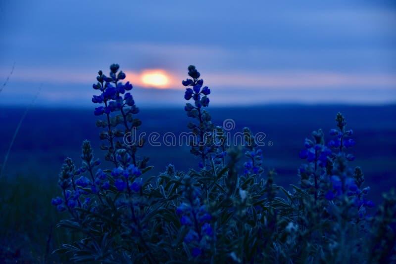 Beautés bleues d'heure : De loup au coucher du soleil sur les collines de ciel de cheval photographie stock libre de droits