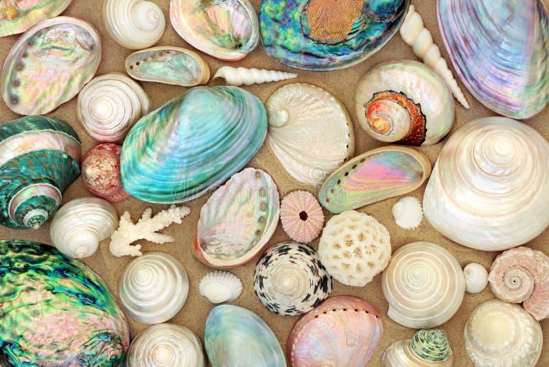 Beautés de coquillage sur le sable photos stock