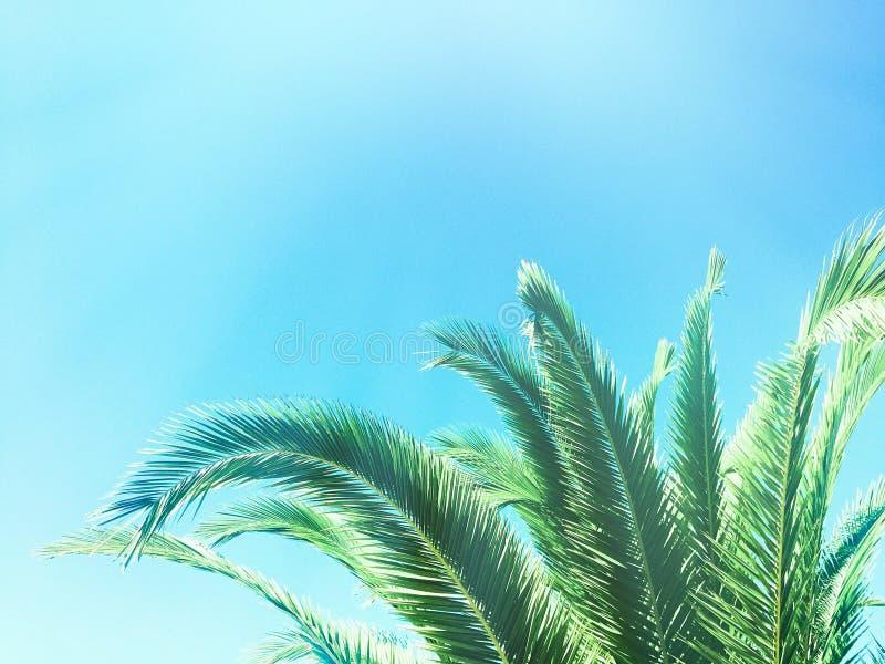 Beaut? des tropiques images libres de droits