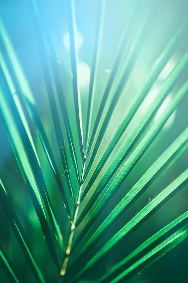 Beaut? des tropiques photo stock
